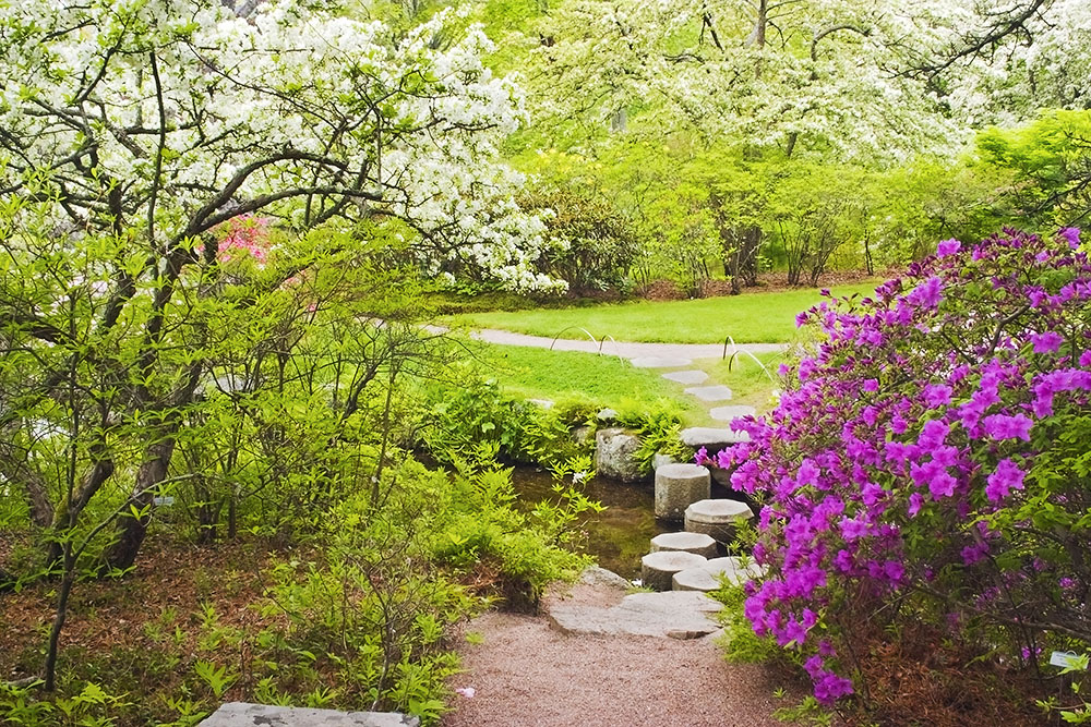 Asticou Azelea Garden